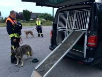 Rettungshunde-10