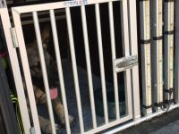 Rettungshunde-11